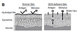 ceramides black skin