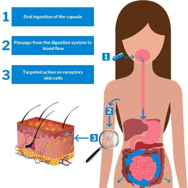 action of nutricosmetics
